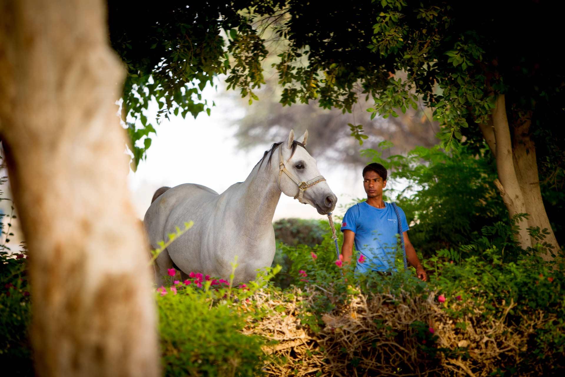 qatar-farm-al-shahania-stud1